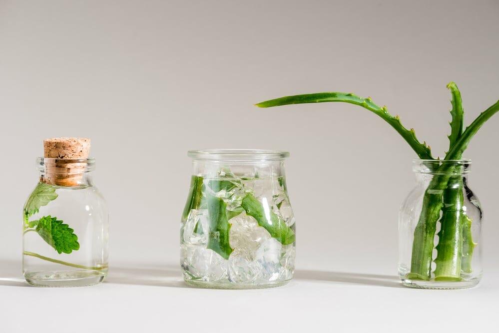 aloe vera - Transpirer moins naturellement - déodorant - info - natura bon